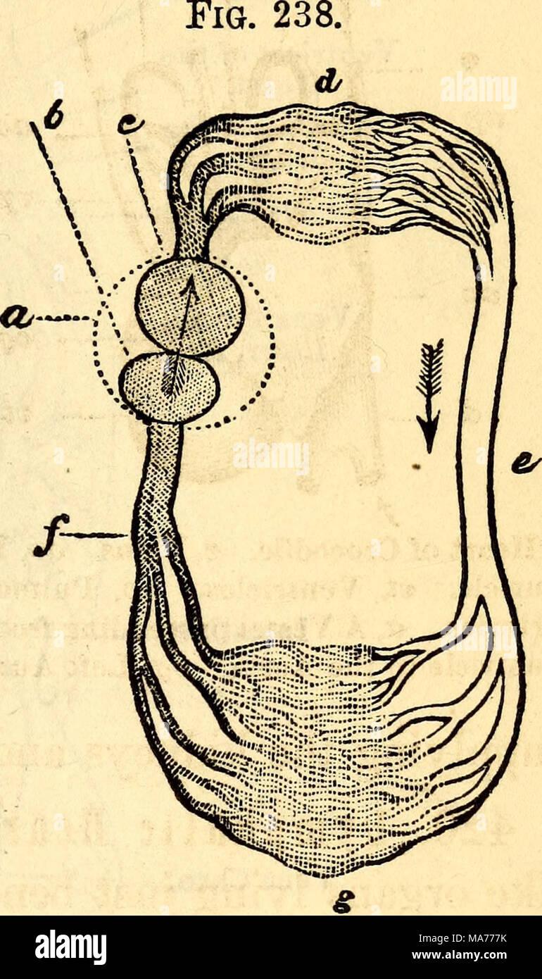 Booksubjectphysiology Stockfotos & Booksubjectphysiology Bilder - Alamy
