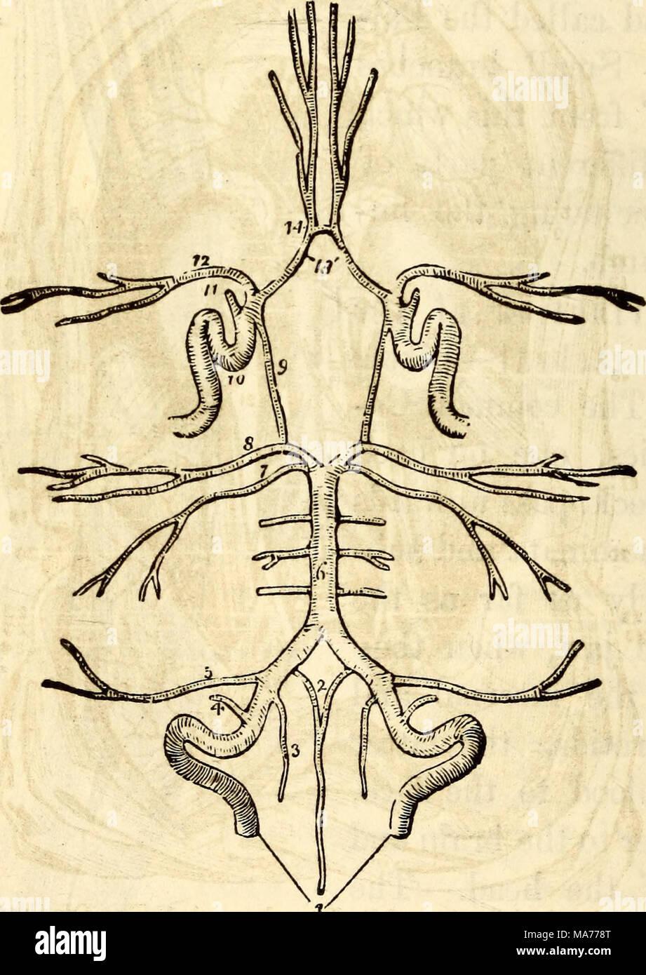 Fantastisch Anatomie Und Physiologie Kapitel 19 Blut Galerie ...