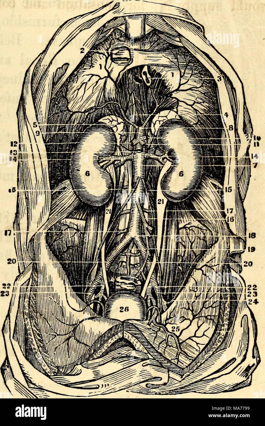 Fantastisch Anatomie Und Physiologie Teil 2 Fotos - Menschliche ...
