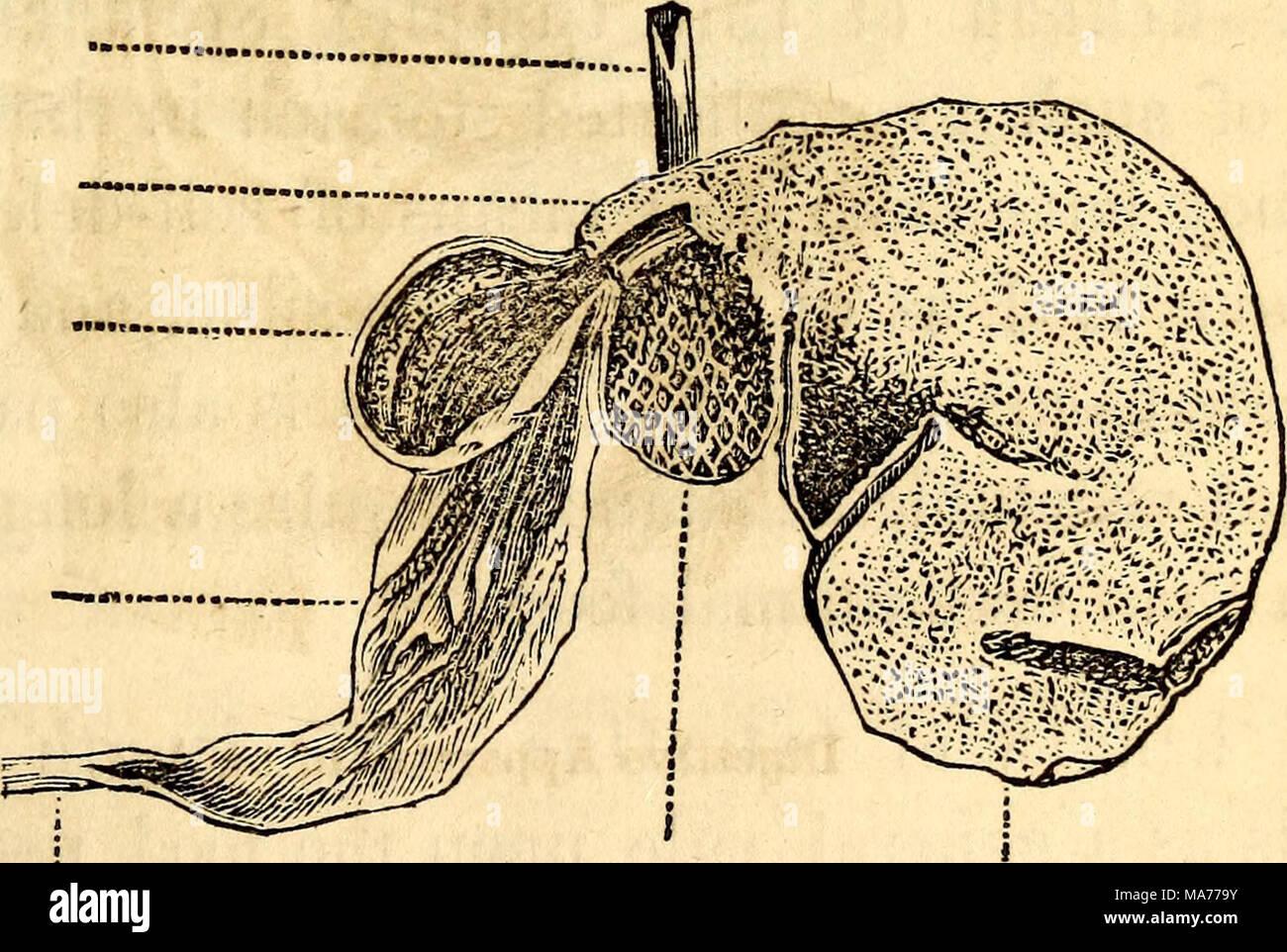 Gemütlich Anatomie Und Physiologie Der Tiere Galerie - Menschliche ...
