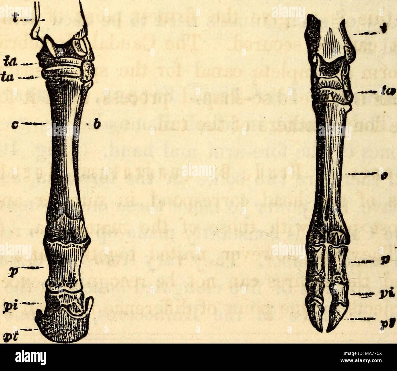 Beste Tibia Knochen Bilder - Anatomie Und Physiologie Knochen Bilder ...