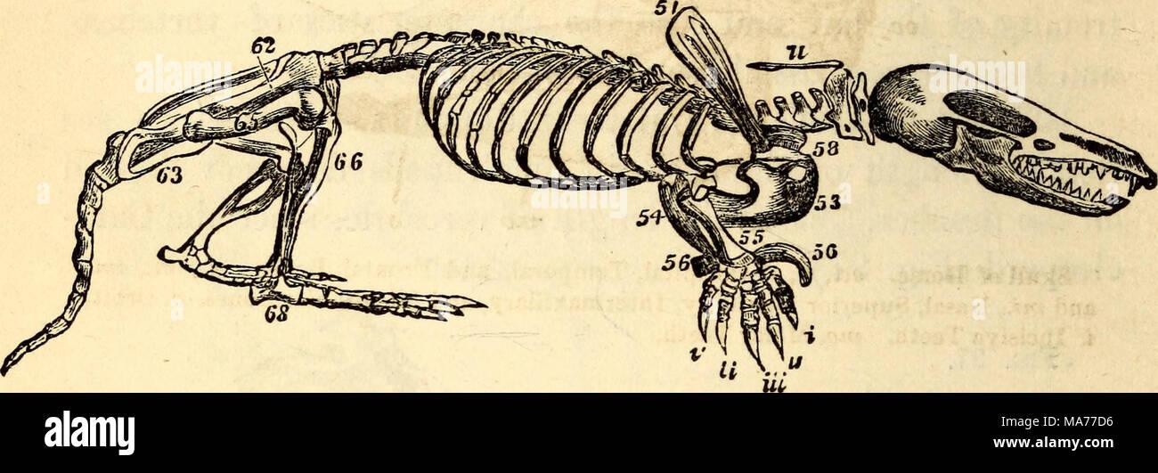 Erfreut Anatomie Und Physiologie Der Tiere Fotos - Menschliche ...