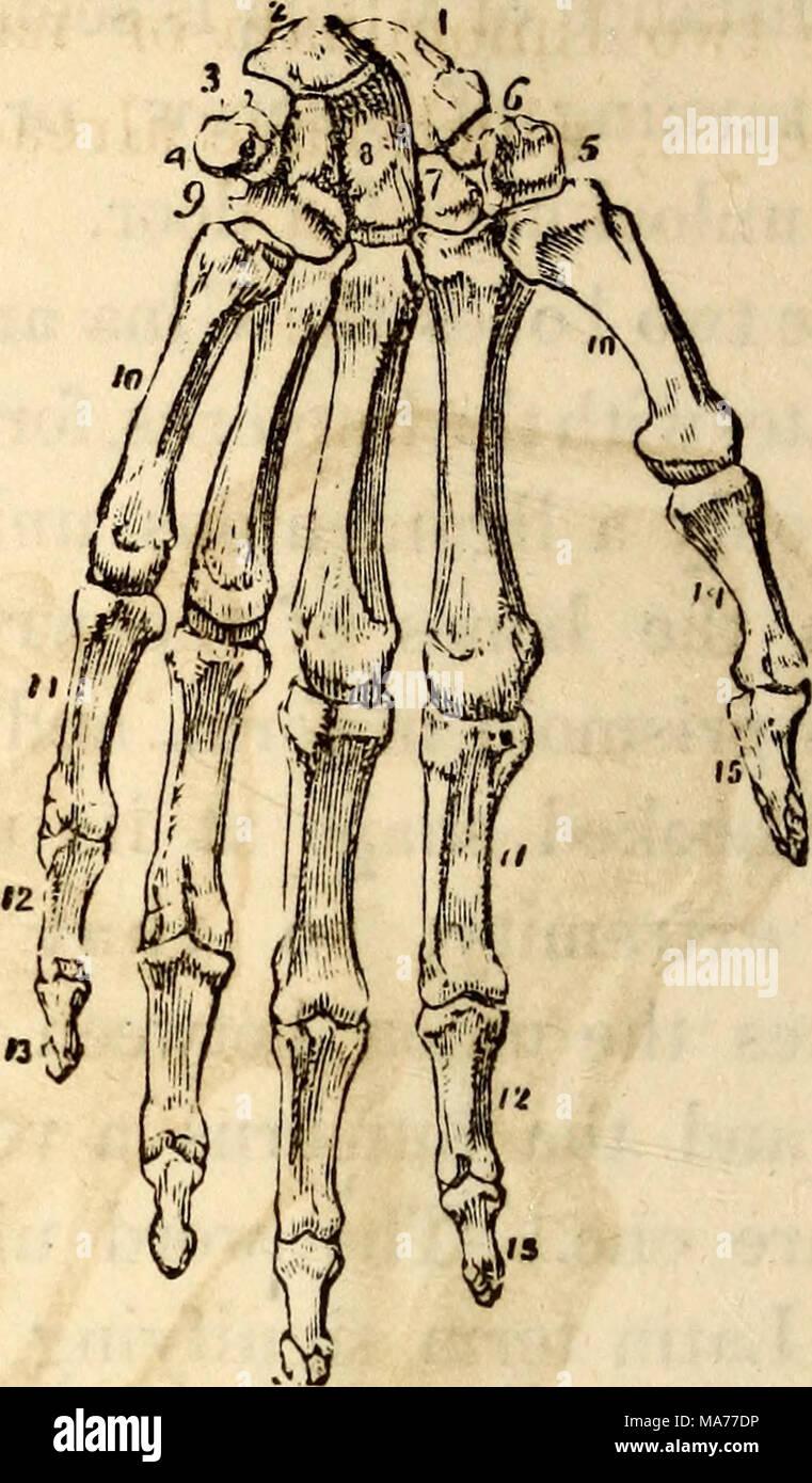 Beste Anatomie Und Physiologie Knochen Zeitgenössisch - Menschliche ...