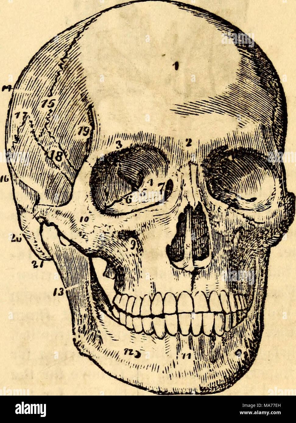 Großzügig Anatomie Und Physiologie 1 Und 2 Sommer Fotos ...
