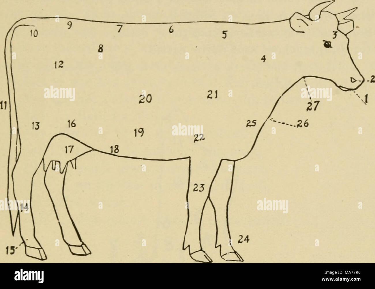 Diagram Of Cow Stockfotos & Diagram Of Cow Bilder - Alamy