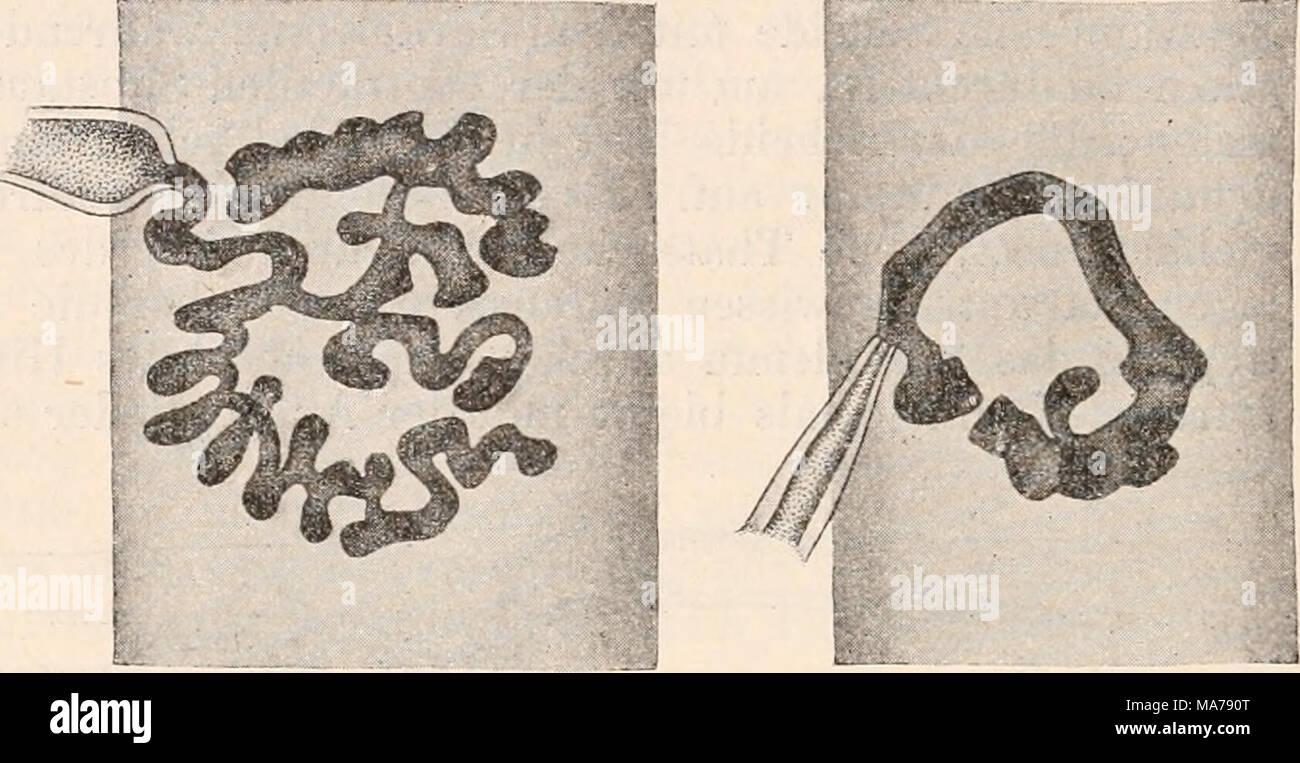 Berühmt Schwein Innere Anatomie Fotos - Menschliche Anatomie Bilder ...