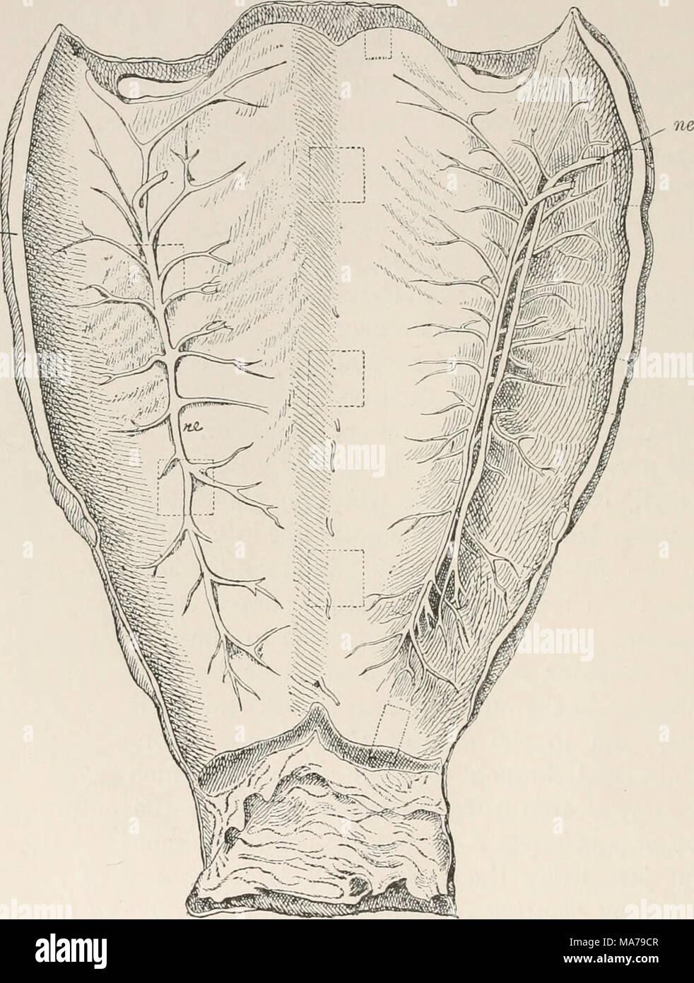 Fein Menschliche Anatomie Und Physiologie Kurse Galerie ...