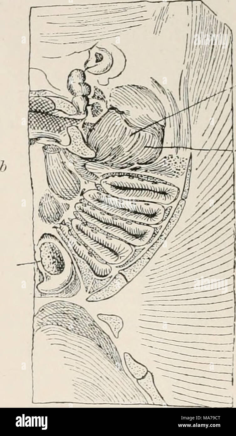 Fantastisch Vergleichende Anatomie Und Physiologie Zeitgenössisch ...