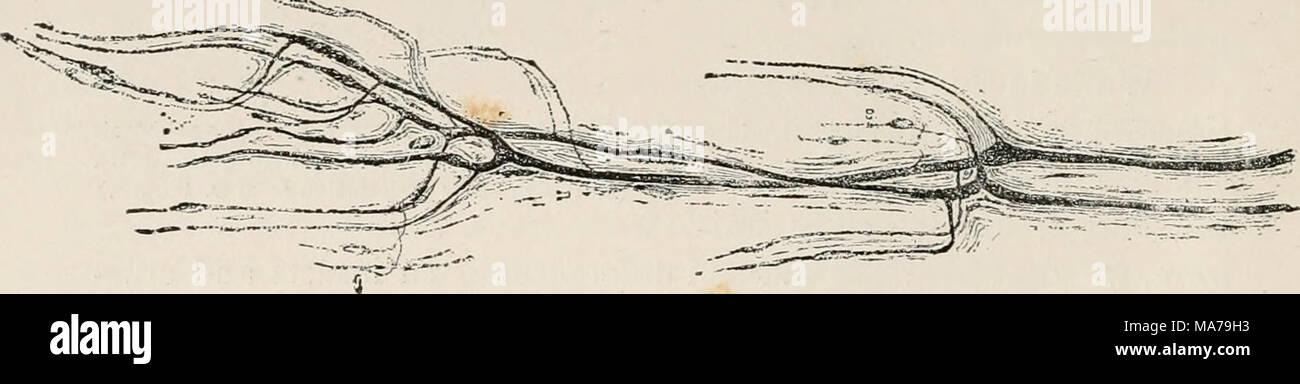 Beste Muskel Färbung Seite Ideen - Druckbare Malvorlagen - amaichi.info