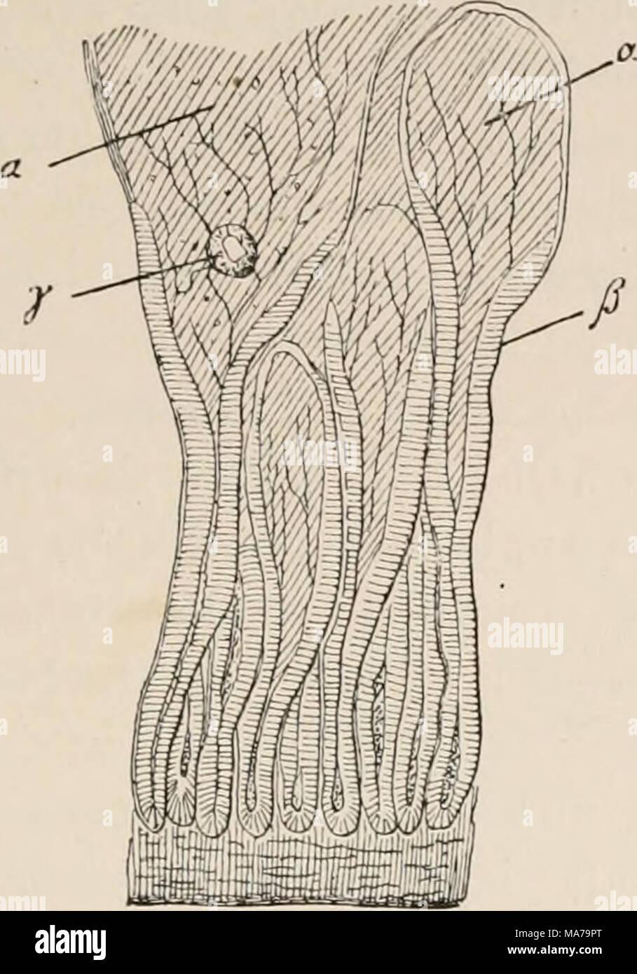 Ausgezeichnet Fallen Muskel Zeitgenössisch - Menschliche Anatomie ...