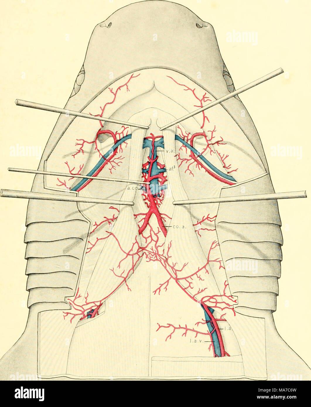 Ungewöhnlich Hinterer Schulterdiagramm Fotos - Menschliche Anatomie ...