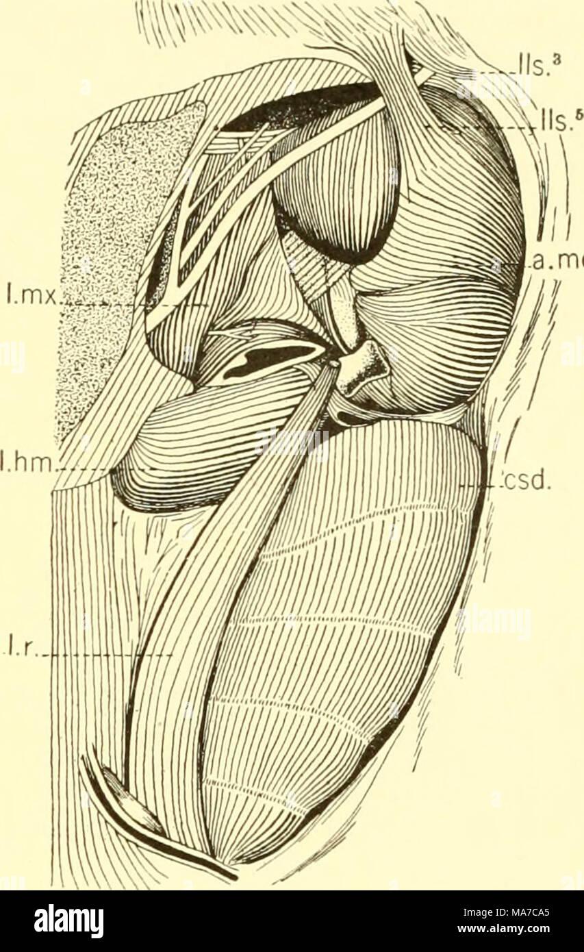 Großzügig Anatomie Zurück Muskeln Bilder - Anatomie Ideen - finotti.info