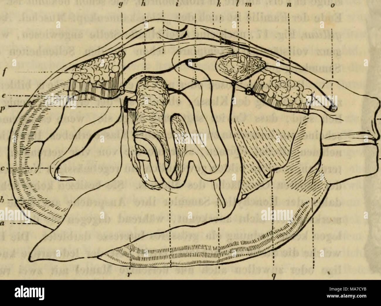 Genital H Stockfotos & Genital H Bilder - Alamy