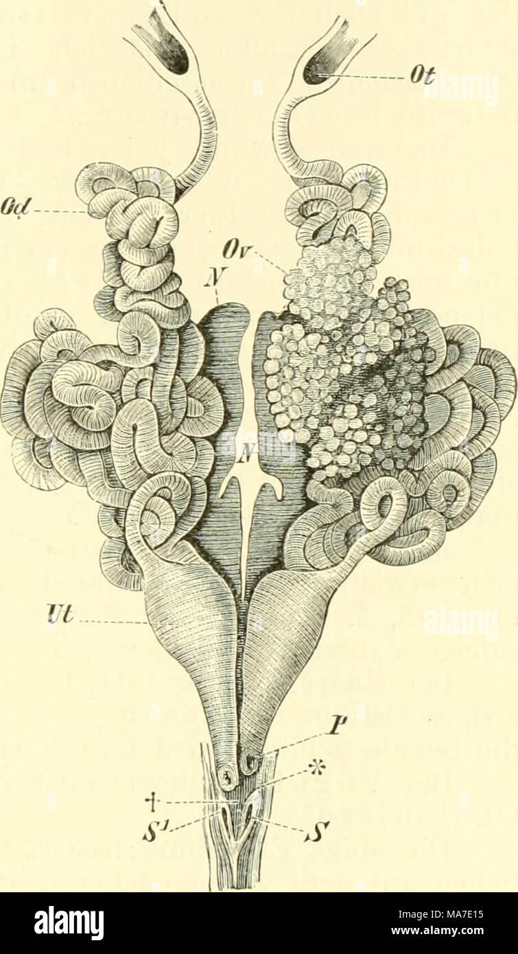 Fantastisch Vergleichende Anatomie Und Physiologie Ideen - Anatomie ...