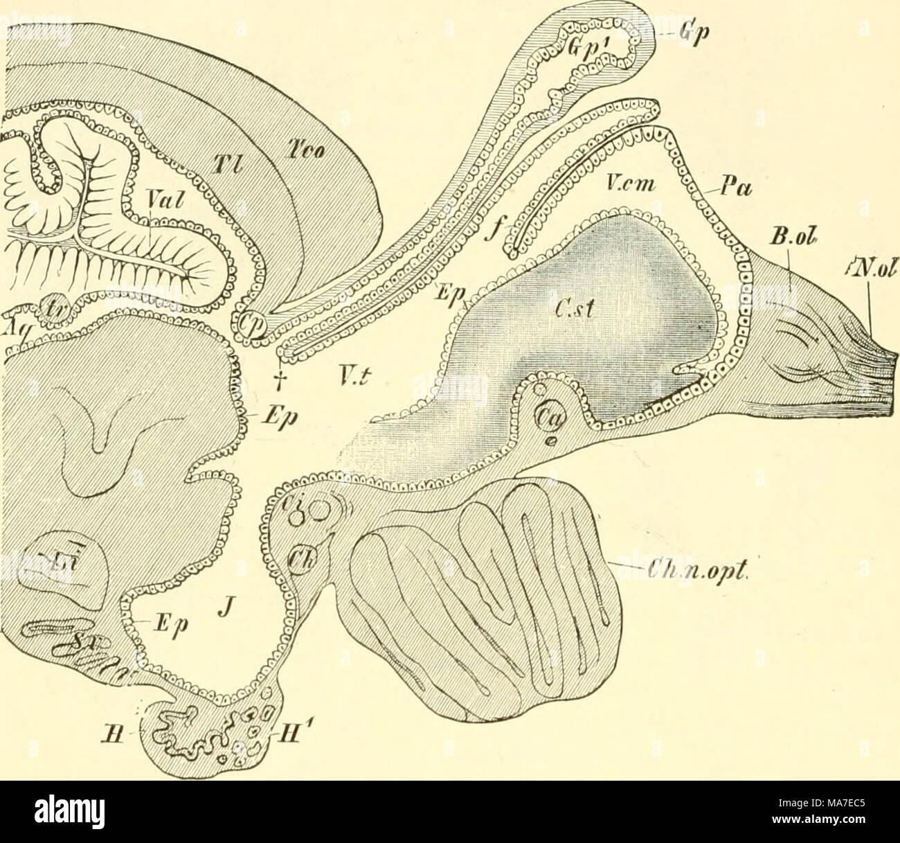 Ziemlich Vergleichende Anatomie Der Tiere Ideen - Menschliche ...