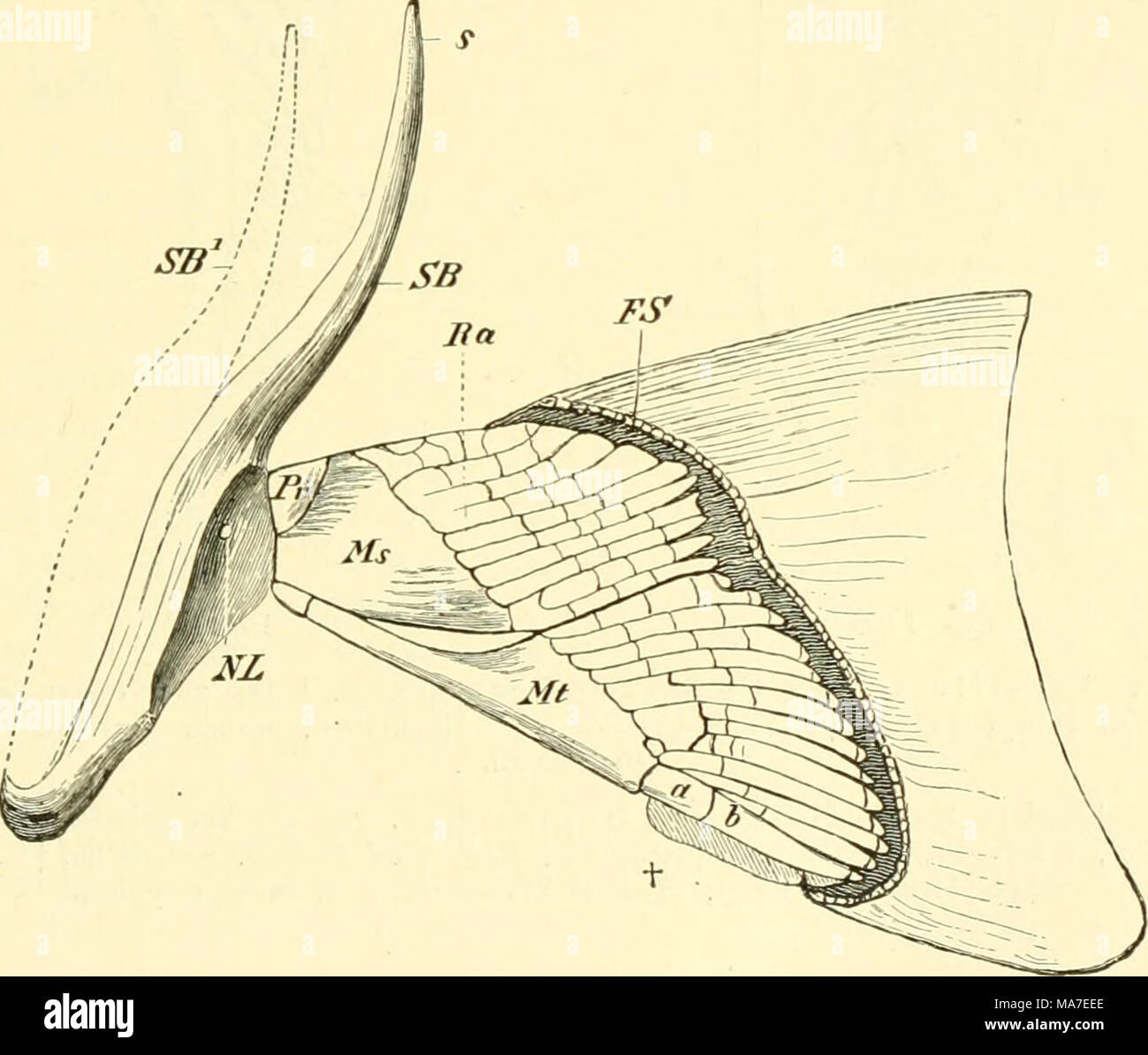 Tolle Beispiele Für Anatomie Galerie - Menschliche Anatomie Bilder ...