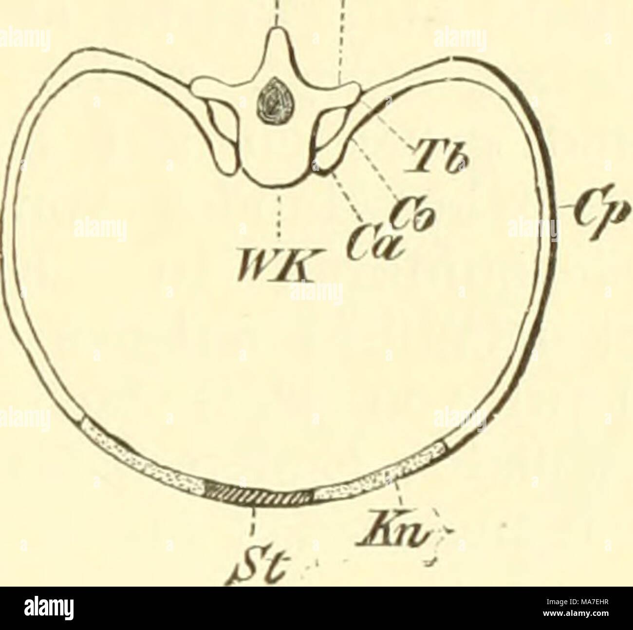 Fein Brustbeins Diagramm Fotos - Menschliche Anatomie Bilder ...