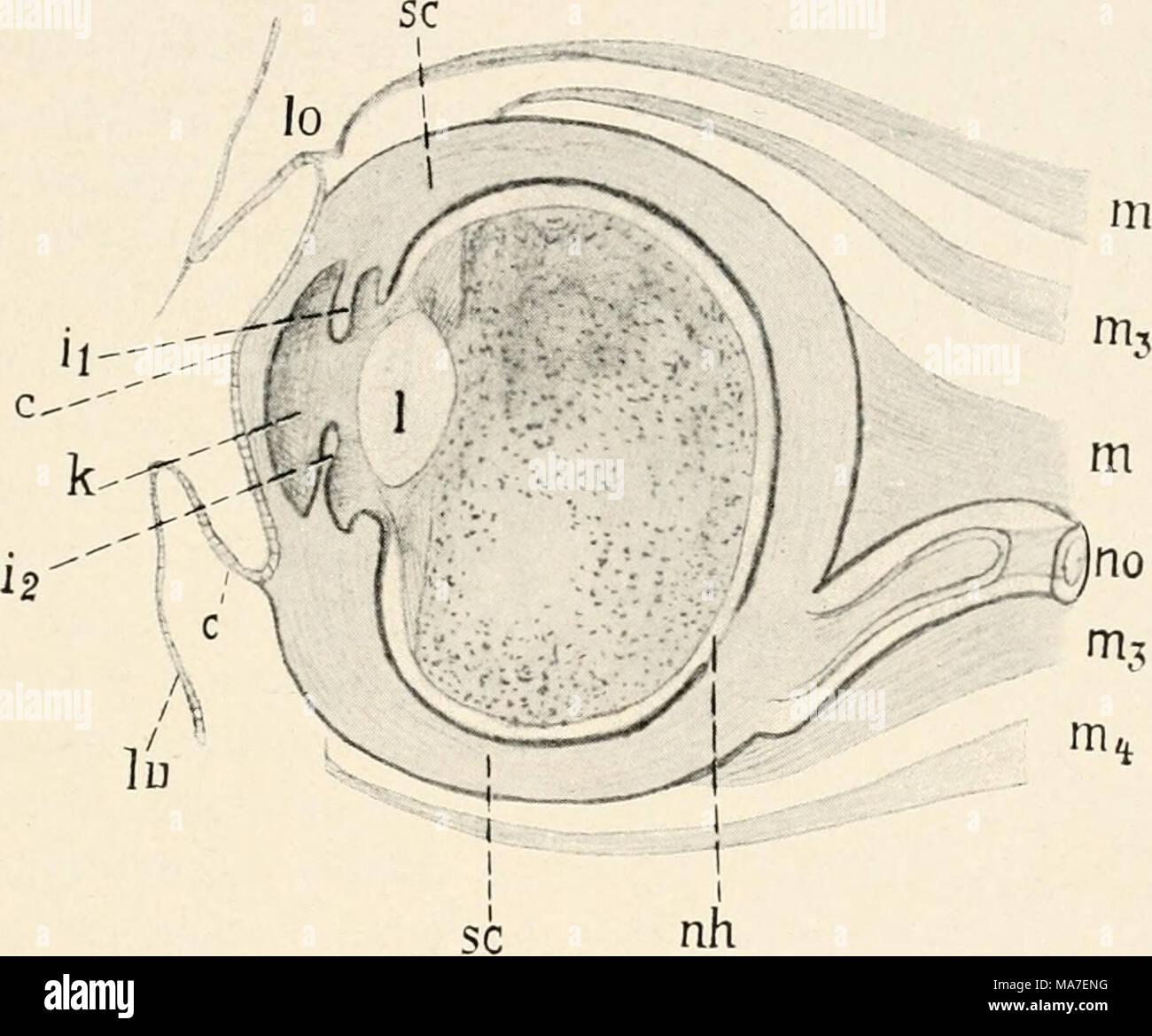 Großzügig Tier Auge Anatomie Zeitgenössisch - Menschliche Anatomie ...