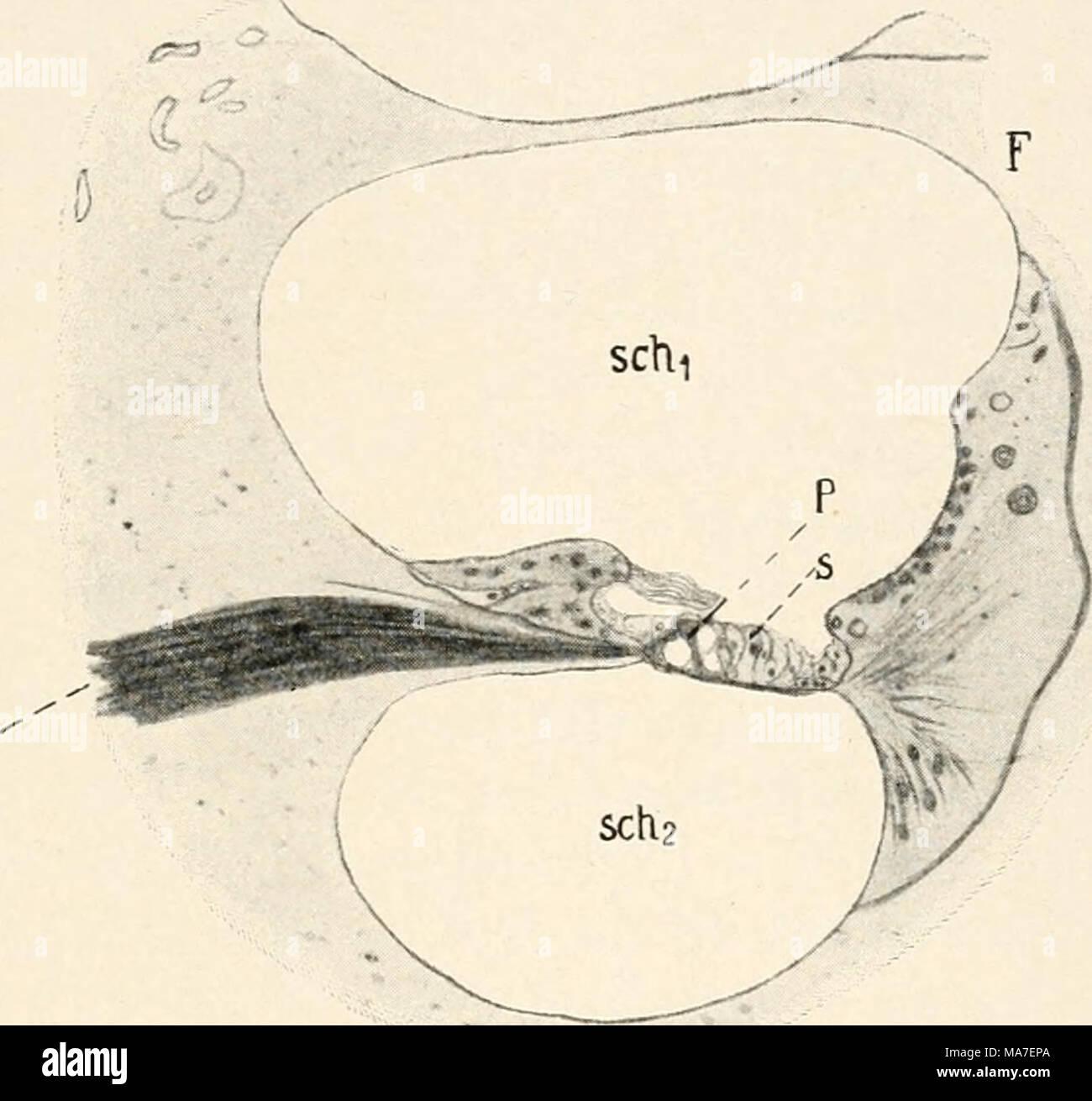 Groß Gehirn Schnittsanatomie Fotos - Anatomie Ideen - finotti.info