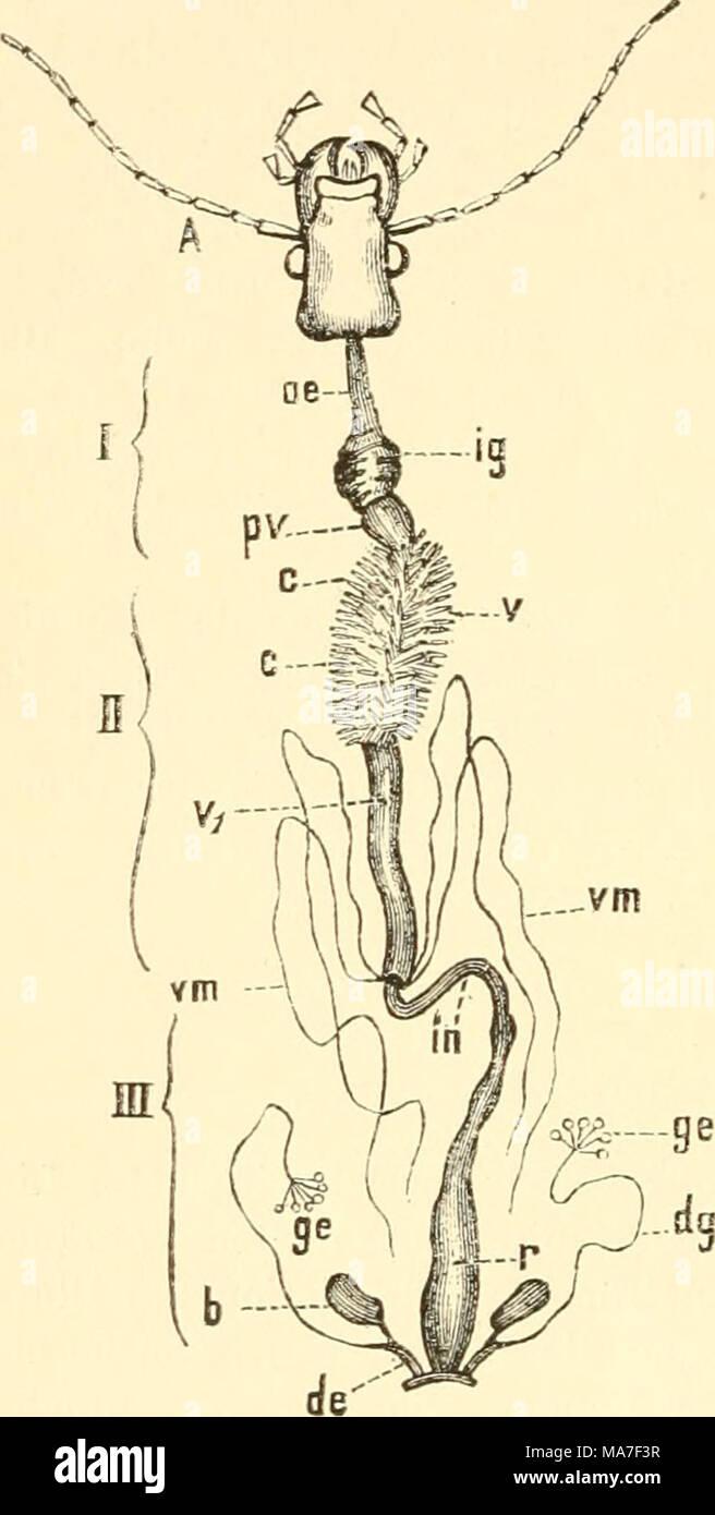 Nett Einführung In Anatomie Fotos - Anatomie Ideen - finotti.info