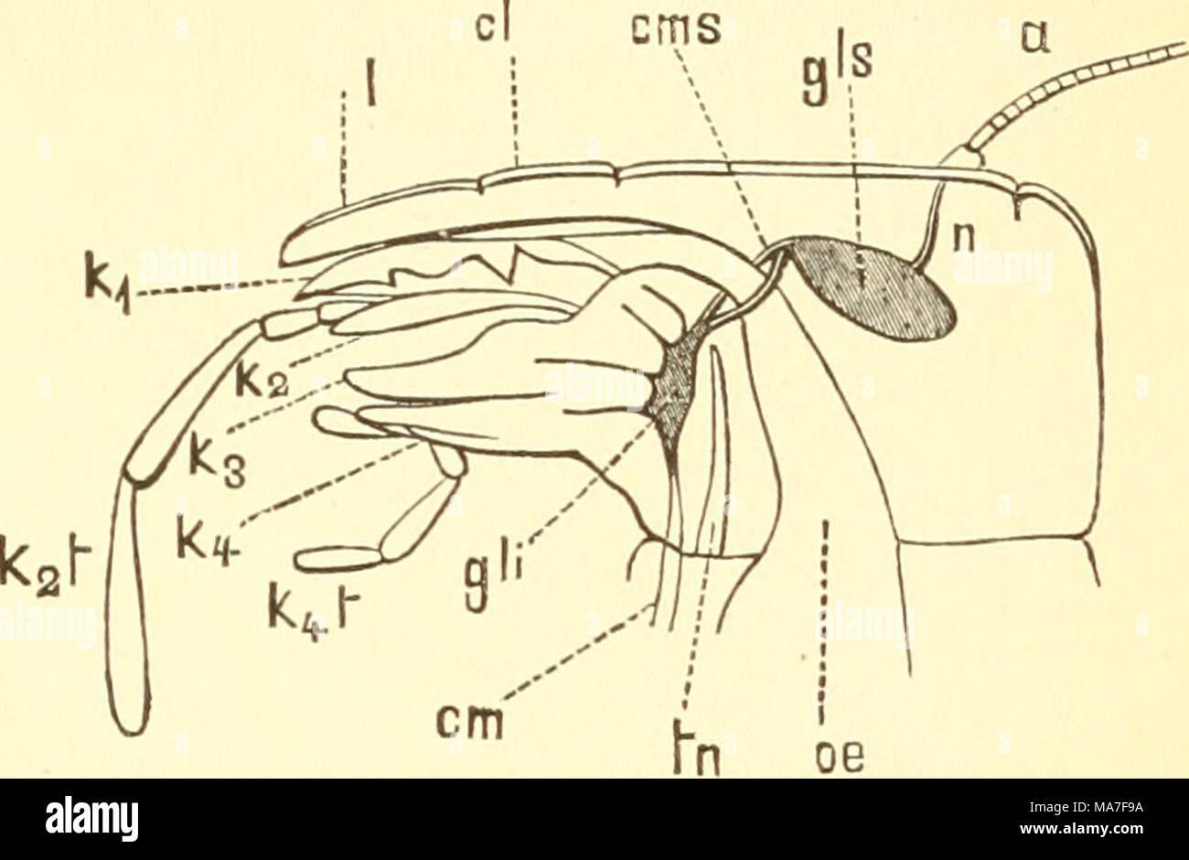 Beste Mund Diagramm Bilder - Anatomie Und Physiologie Knochen Bilder ...