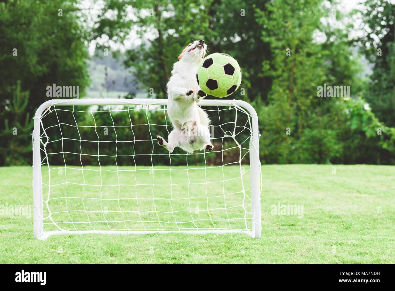 Comic Hund Fangen Fussball Fussball Kugel Speichern Ziel Der