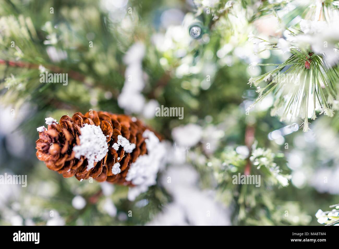 Weihnachtsbaum Nadeln.Schnee Winter Makro Nahaufnahme Von Grünen Pinien Weihnachtsbaum