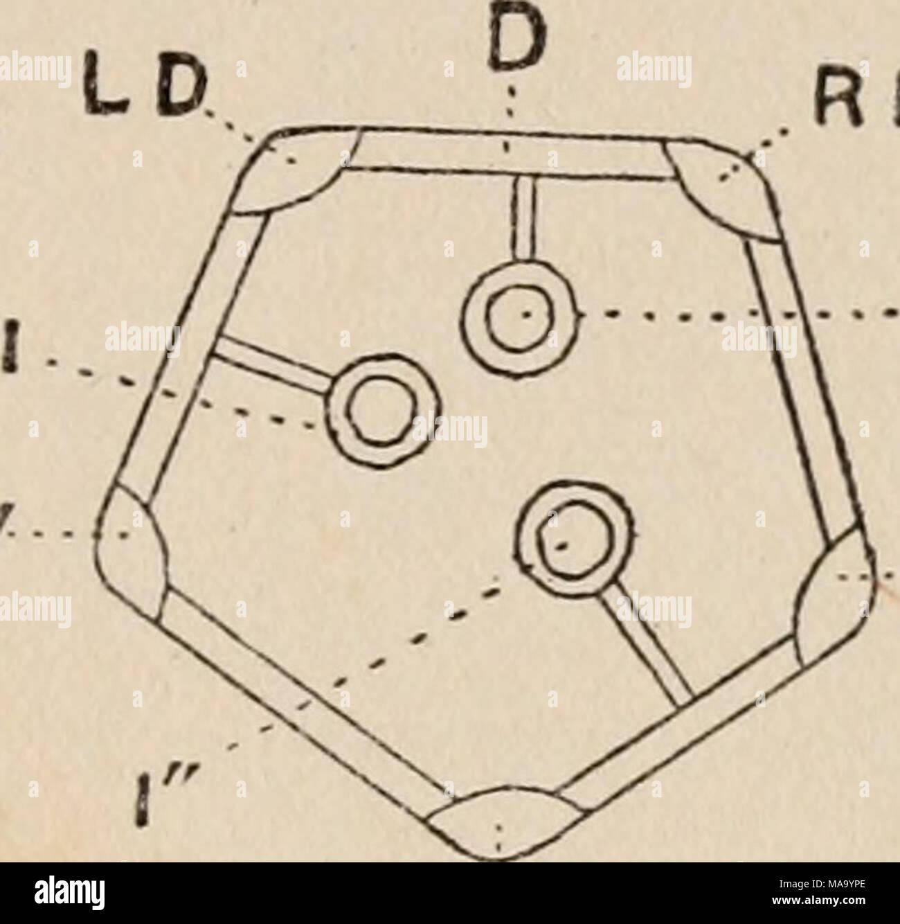 Ungewöhnlich Markierte Diagramm Des Menschlichen Auges Galerie ...