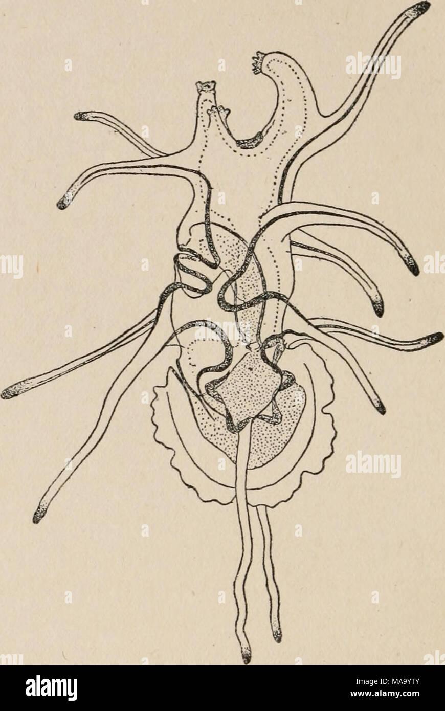 Tolle Bild Des Verdauungstraktes Ideen - Menschliche Anatomie Bilder ...
