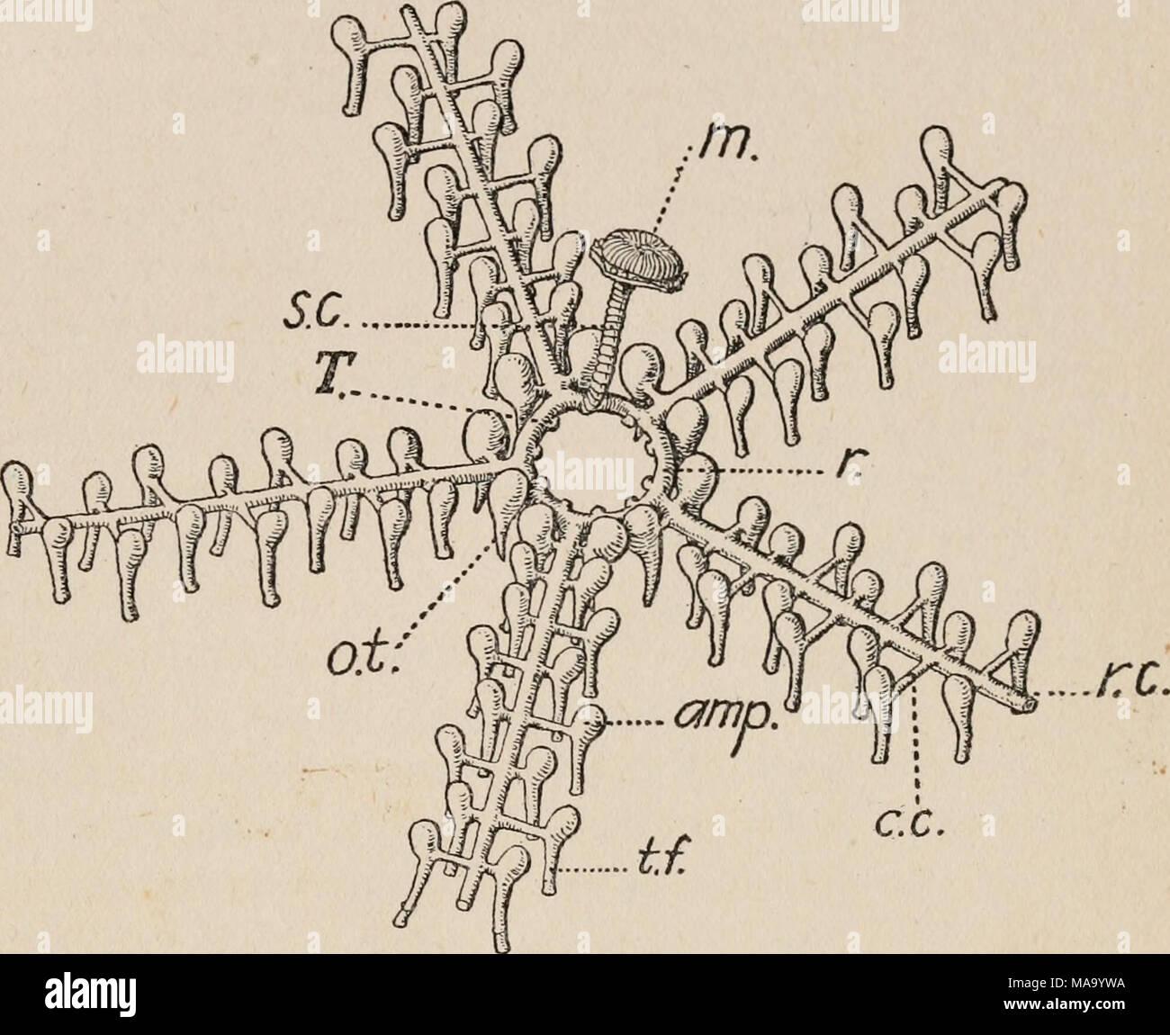 Berühmt Das Kreislaufsystemdiagramm Ideen - Menschliche Anatomie ...