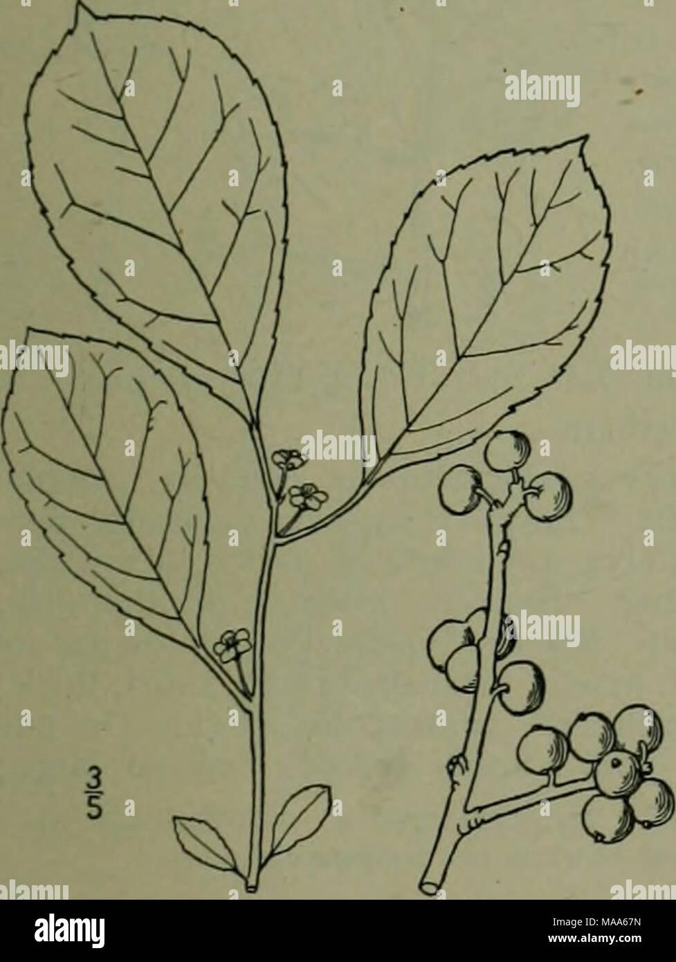 . Eine Illustrierte Flora von der nördlichen USA, Kanada und die britischen Besitzungen: von Neufundland zu den Parallelen der südlichen Grenze von Virginia und vom Atlantik westwärts nach dem 102 Meridian. Stockfoto
