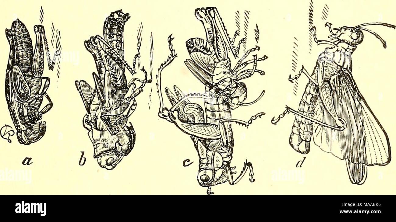 Beste Alle Teile Des Verdauungssystems Ideen - Anatomie Ideen ...