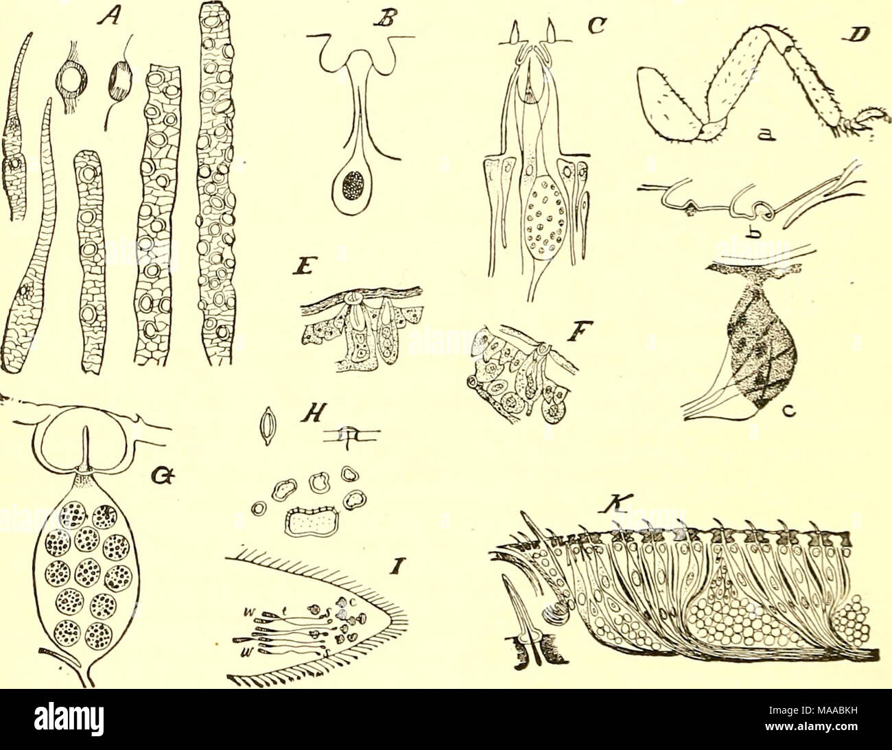 Großartig Wo Sind Ihre Organe Entfernt Ideen - Menschliche Anatomie ...