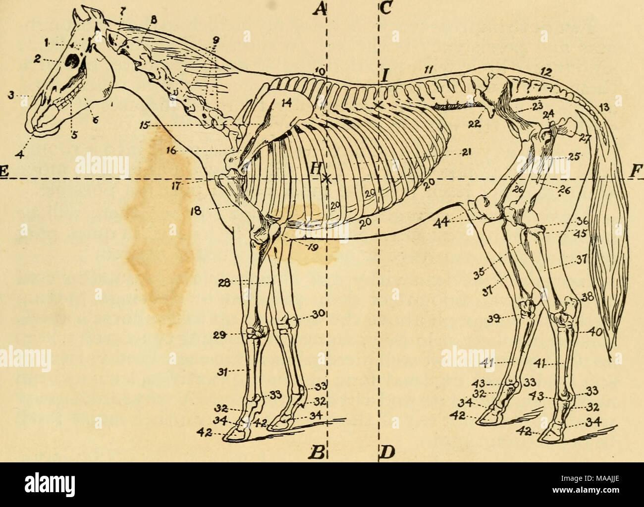 Erfreut Atlas Knochenanatomie Fotos - Menschliche Anatomie Bilder ...