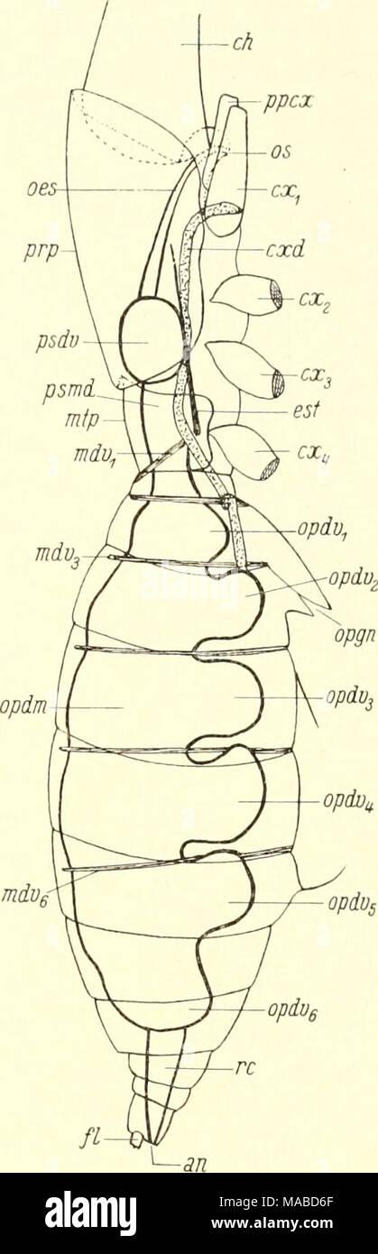 Fantastisch Menschlicher Brustbeins Galerie - Menschliche Anatomie ...