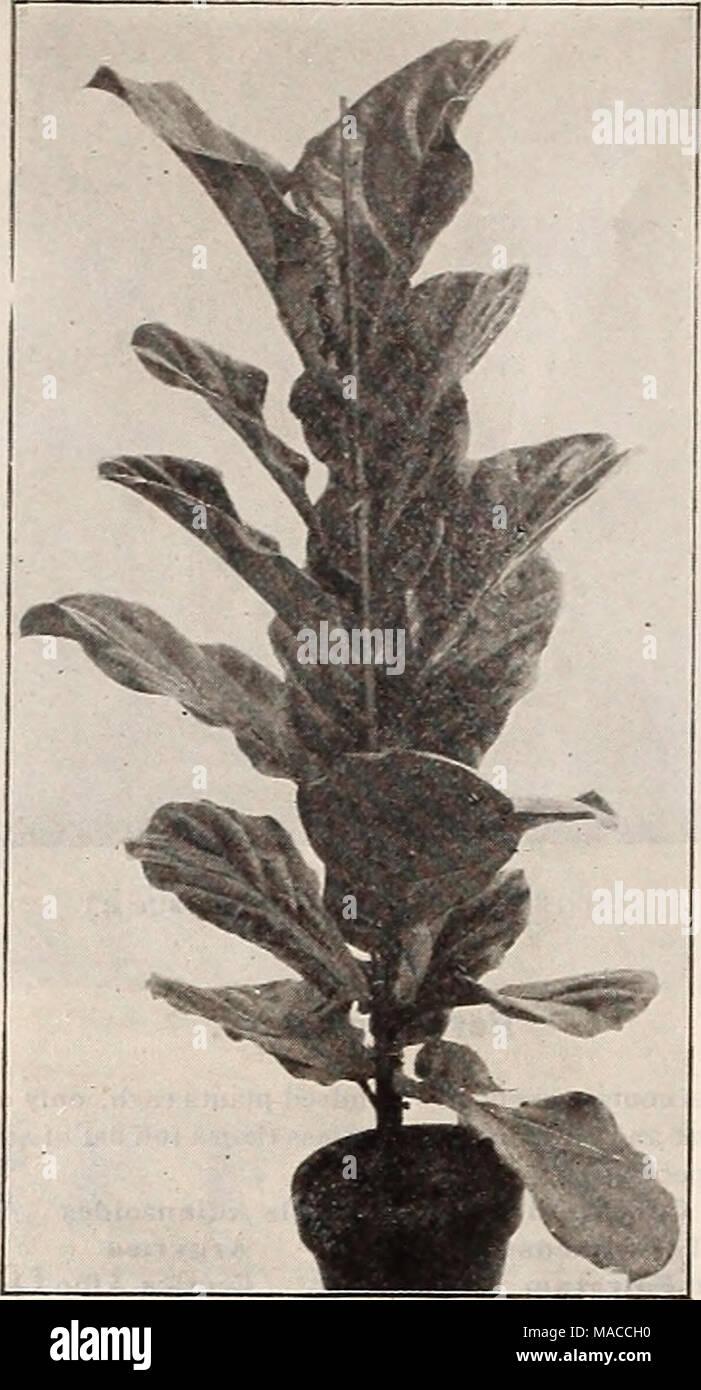 Dreer Der Grosshandel Preisliste Samen Fur Floristen Pflanzen Fur