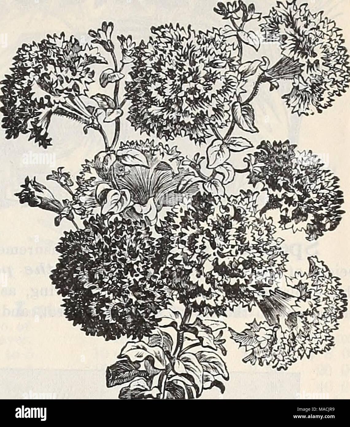 Welche Blumen Blühen Im September dreer der großhandel preisliste herbst ausgabe september 1899