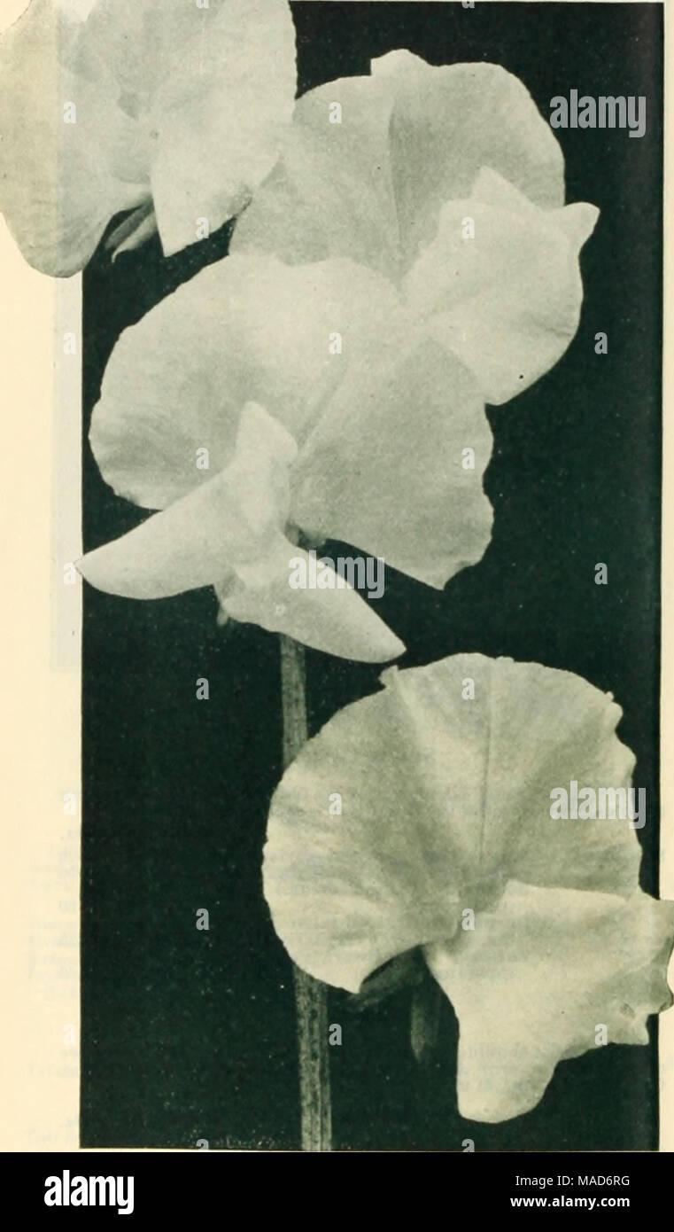 Dreer Die Saisonale Spezialitaten Fur Floristen Einschliesslich