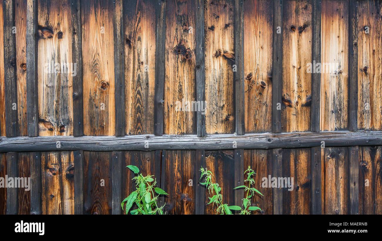 Vintage Holz Wand Mit Brennnesseln. Braun Gestreifte Textur Des Alten  Verblasst Planken Mit Ästen Und Grüne Pflanzen Als Dekorativen Hintergrund.