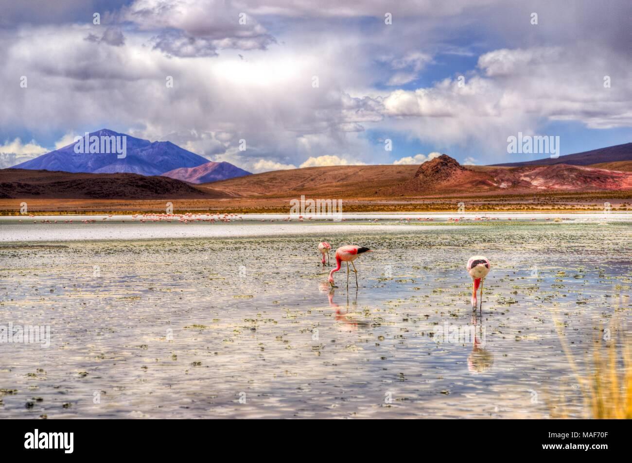 Altiplano Lagune in Bolivien, Südamerika Stockbild