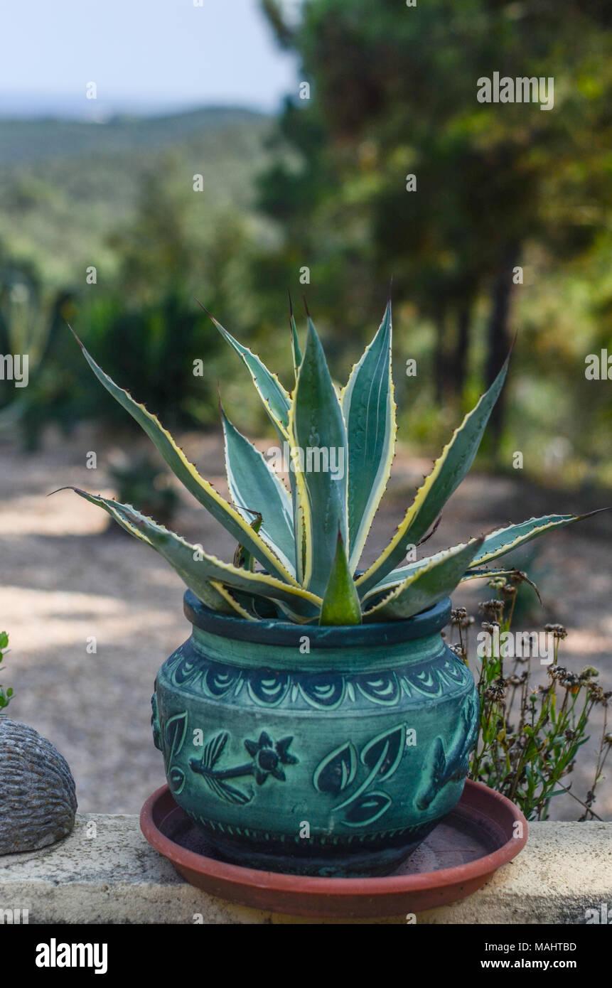 Attraktiv Spanisch Blumen Und Topfpflanzen In Einem Garten, Hoch In Den Hügeln Von  Girona Spanien, Yuccapalmen
