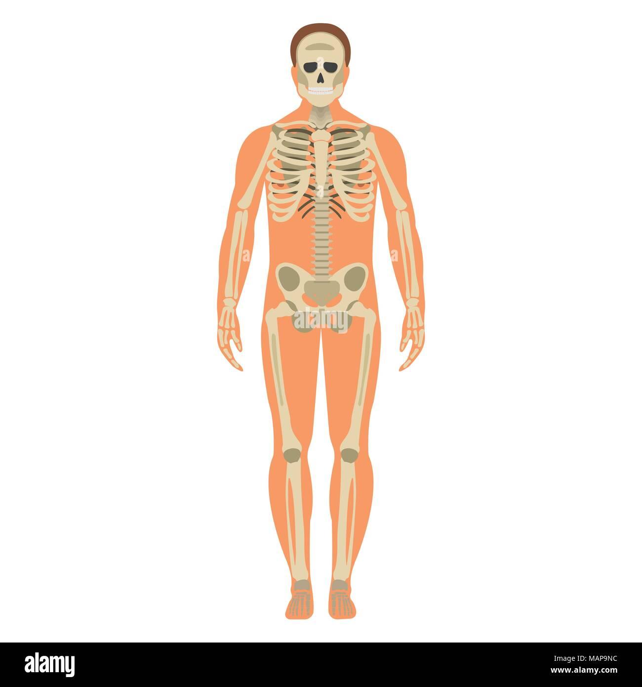 Großzügig Menschliches Körpersystem Quiz Zeitgenössisch ...