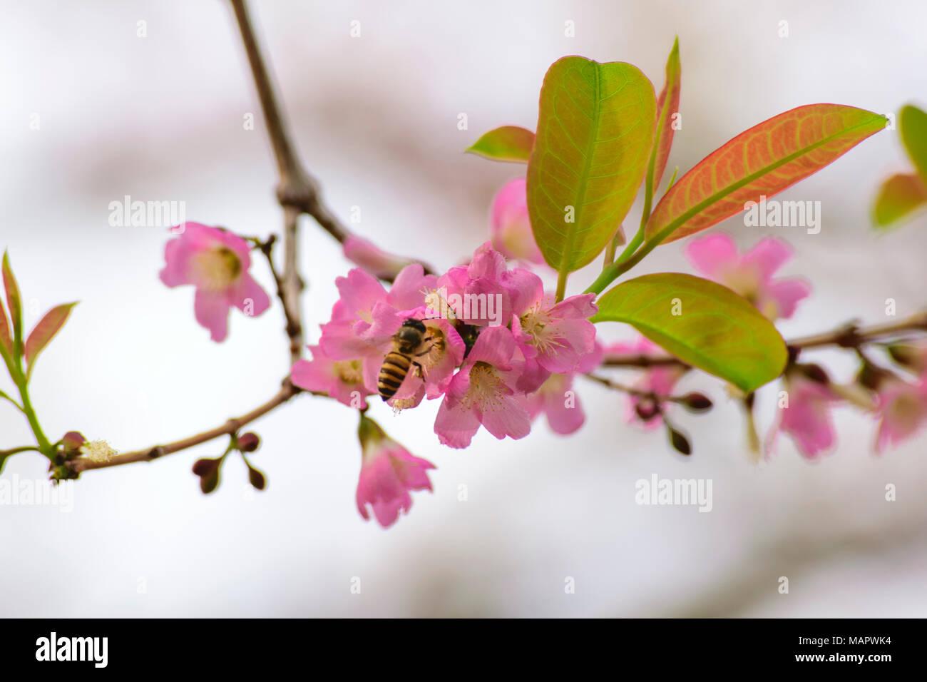 Frische pur natürlich rosa Blumen und Bienen (bestäubung) Stockbild