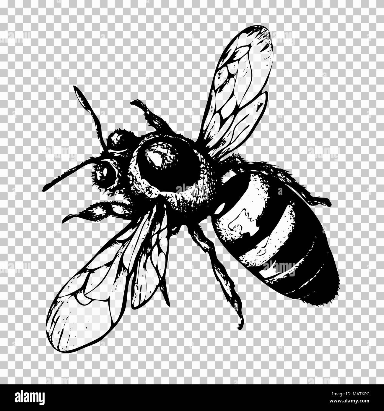 Biene Hand Zeichnen Schwarze Skizze Insekt Auf Einen Transparenten