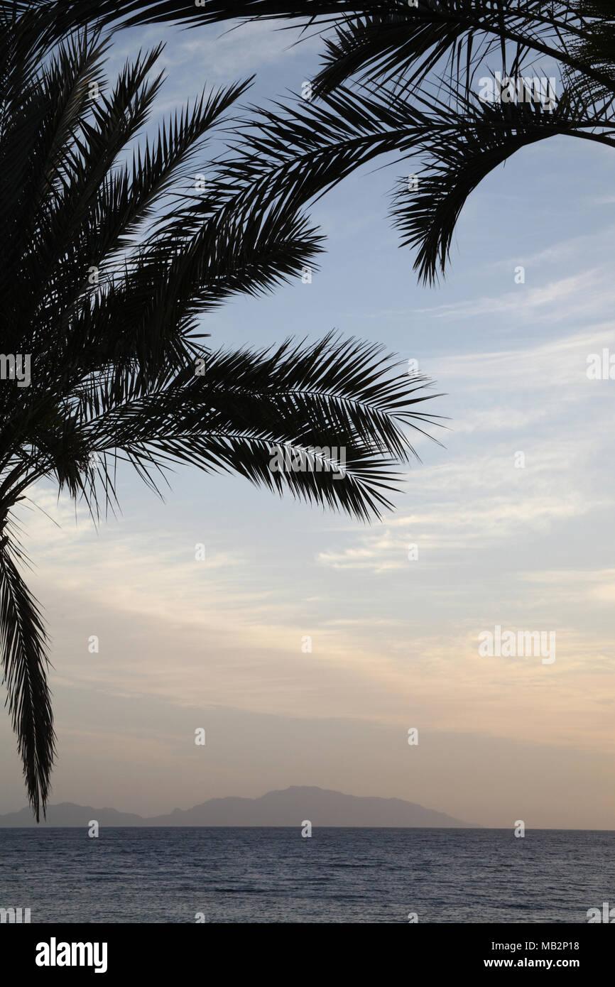 Sonnenaufgang in der Nähe von dem Meer, Palmen, Afrika, Ägypten Stockbild