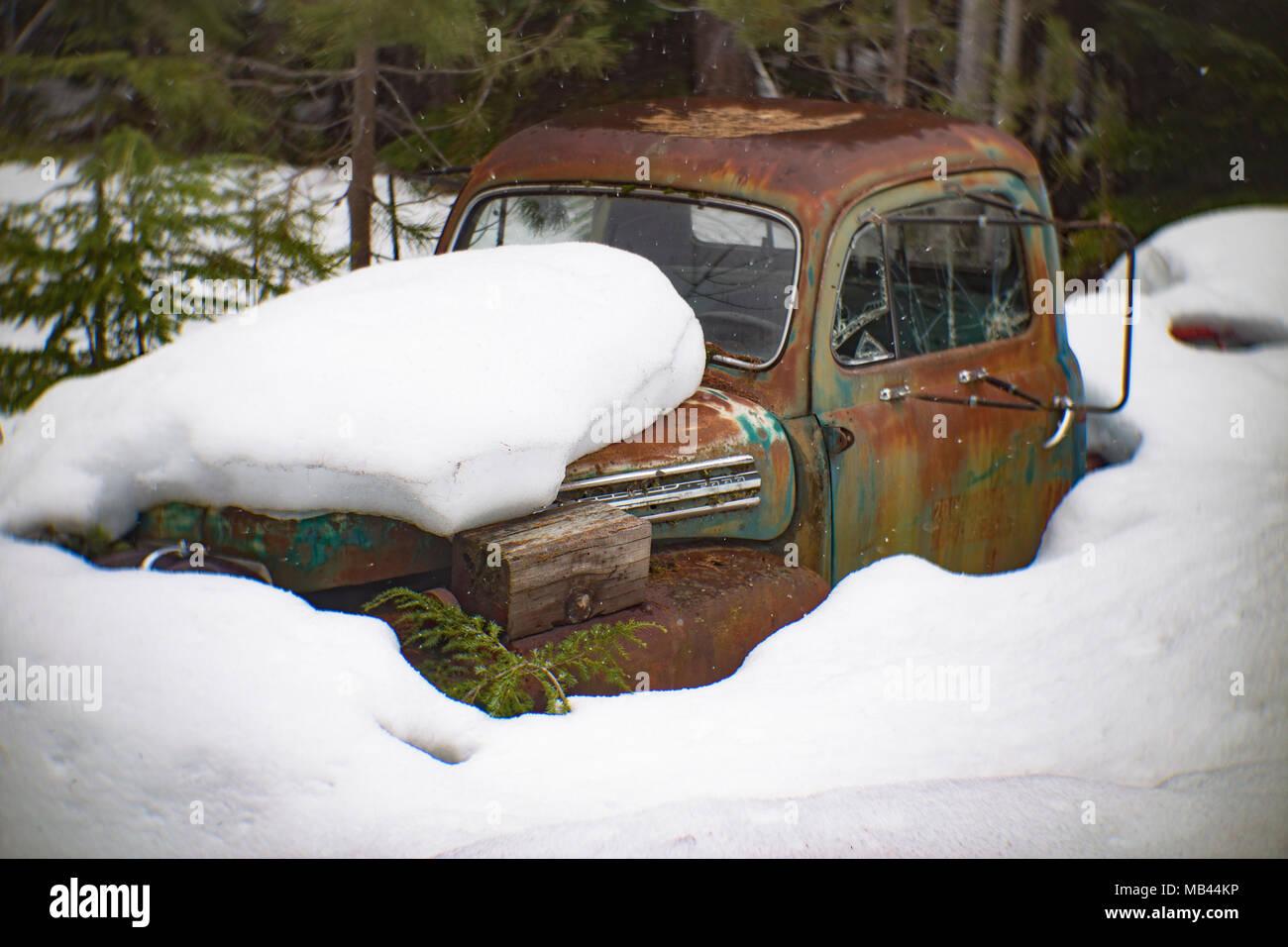 Eine alte Rosten 1951 Ford 5-Lkw, begraben im Schnee in einem bewaldeten Gebiet hinter eine Scheune, in der Noxon, Montana. Dieses Bild wurde mit einem antiken Petz Stockbild