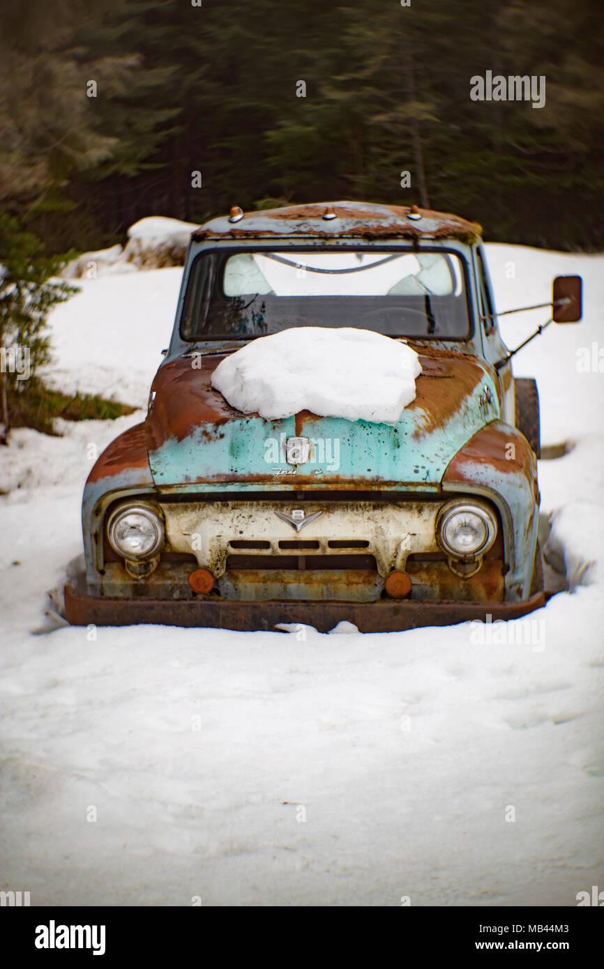 Die Front eines alten, blau 1954 Ford F-250 Truck, in einem Waldgebiet, in Noxon, Montana. Stockbild