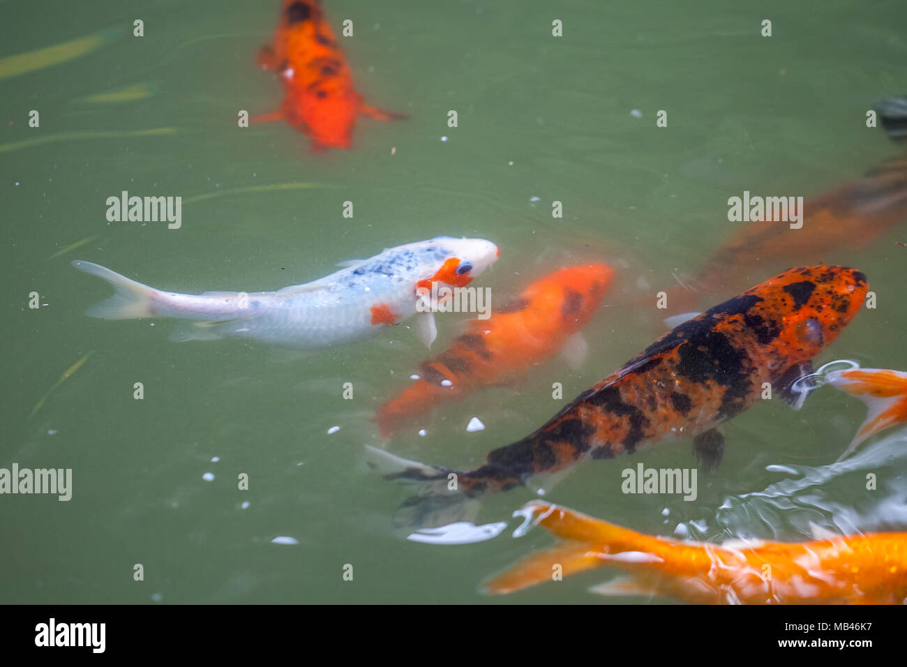 Fantastisch Fisch Färbung Seite Galerie - Framing Malvorlagen ...