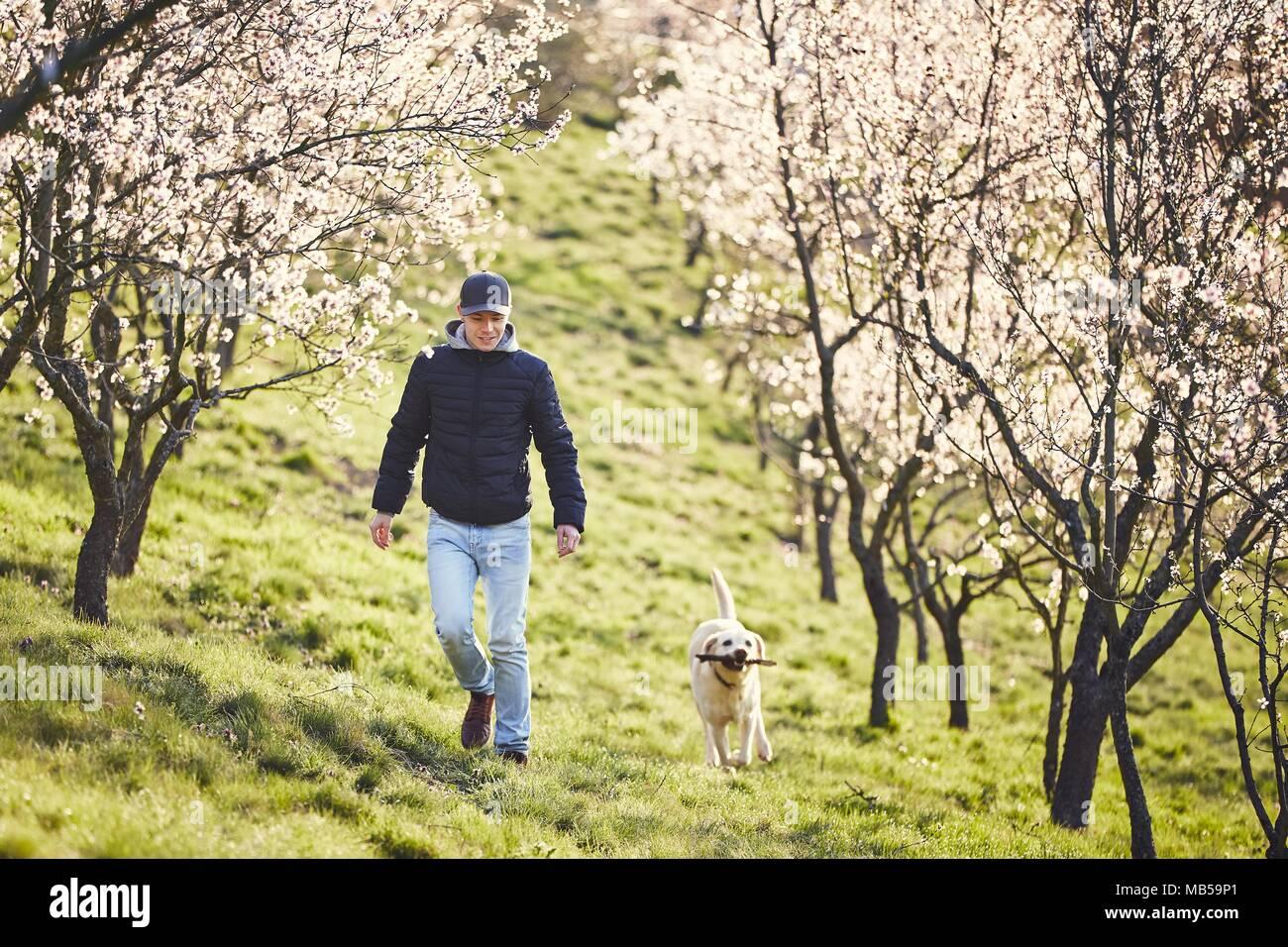 Morgen im Frühling Natur. Mann mit seinem Hund (Labrador Retriever) Wandern zwischen blühenden Bäumen. Stockbild