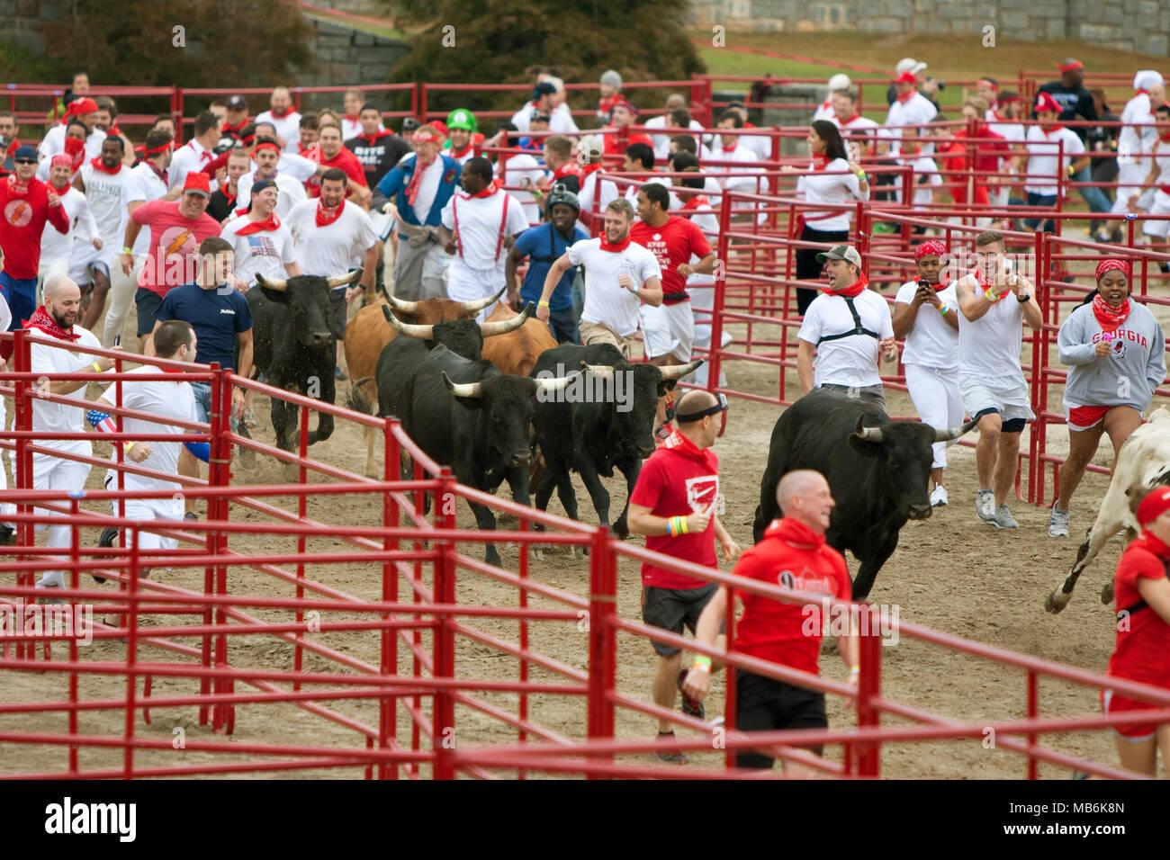 Hunderte von Menschen laufen mit den Bullen am Great Bull Run an der Georgia International Horse Park am 19. Oktober 2013 in Atlanta, GA. Stockbild